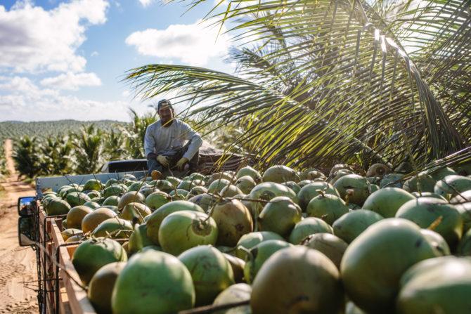 Obrigado – Built a true impact coconut brand