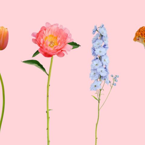 Bloomon – Flowers do so much more than brighten up the room